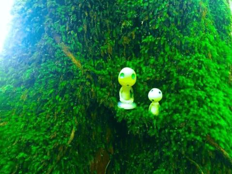 屋久島 観光