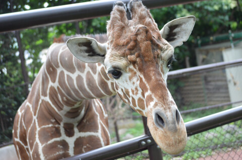 横浜 デート  観光 スポット 野毛山動物園