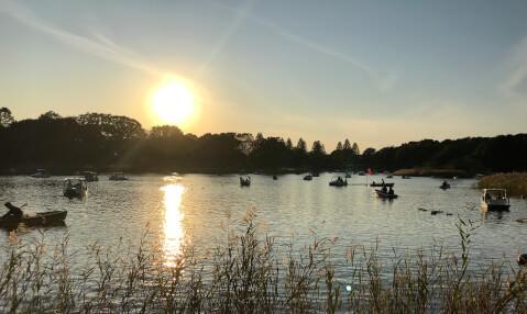 昭和記念公園_水鳥の池