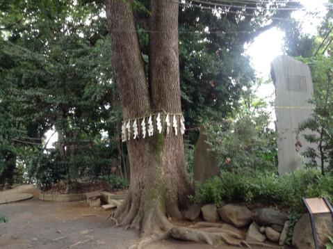 代々木八幡宮-御神木