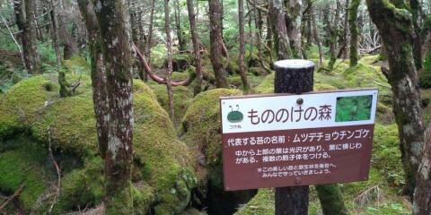 八ケ岳 白駒の池