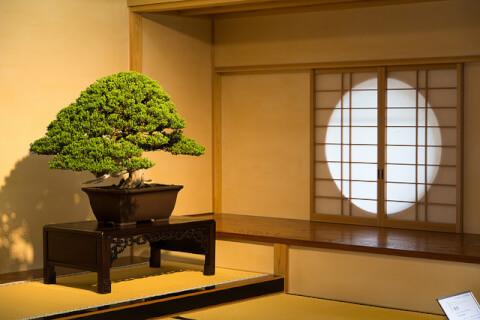 zashiki_kazari_omiya_bonsai_museum