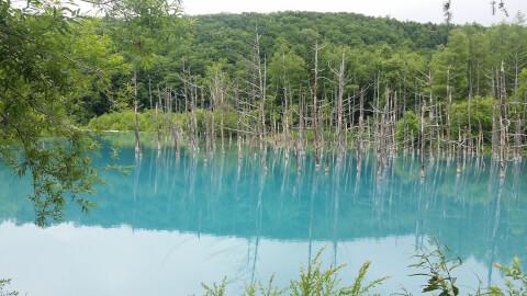 日本 絶景 北海道 青い池