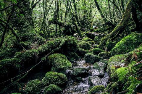 日本 絶景 屋久島 白谷雲水峡
