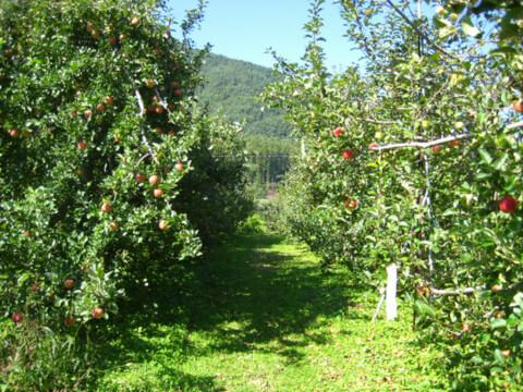 安曇野 観光果樹園