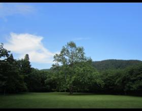 森林公園くつきの森 石脇