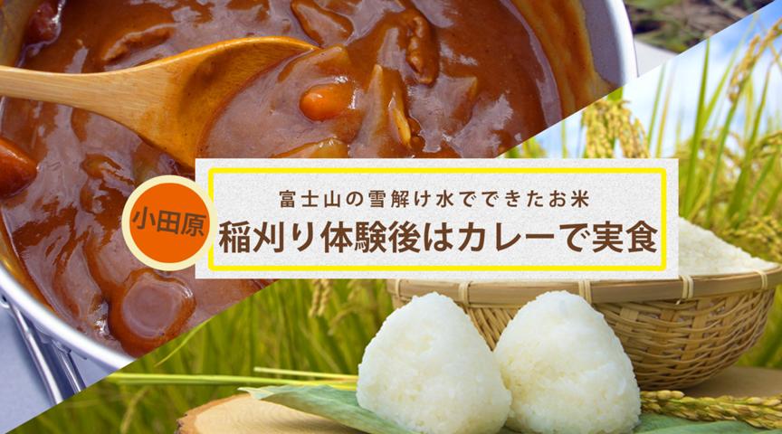 【神奈川県小田原】稲刈り体験&かまど炊きごはんとカレー作り