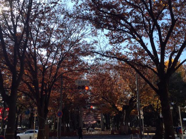 まずは大国魂神社の表参道を散策。