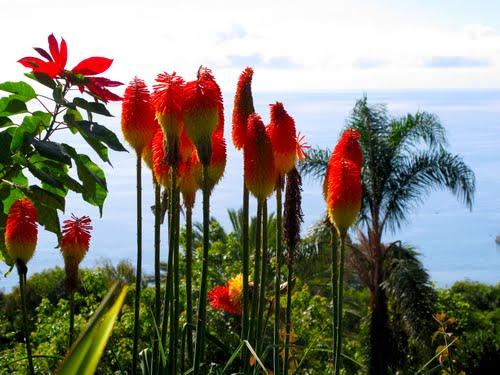 マデイラ諸島は、北大西洋上のポルトガル領の諸島で、首都リスボン西南1000キロに位置する。