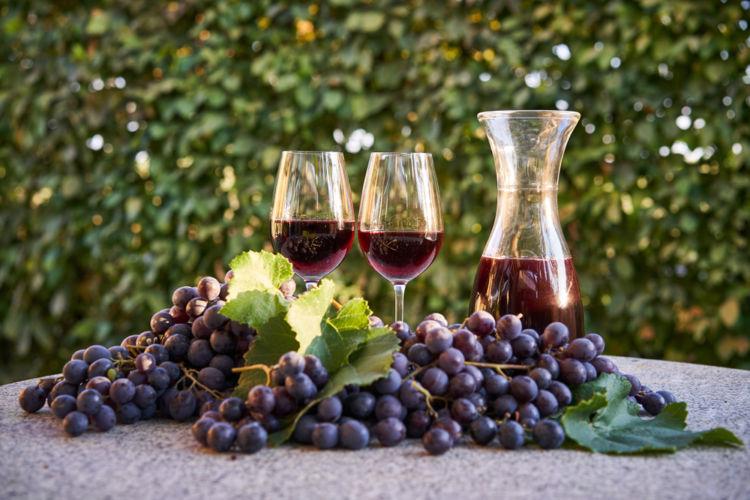 11月はワインの新酒の季節! 世界の新酒をたのしもう