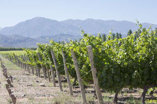 ボディのしっかりしたワインも魅力!アルゼンチンのワインを知る