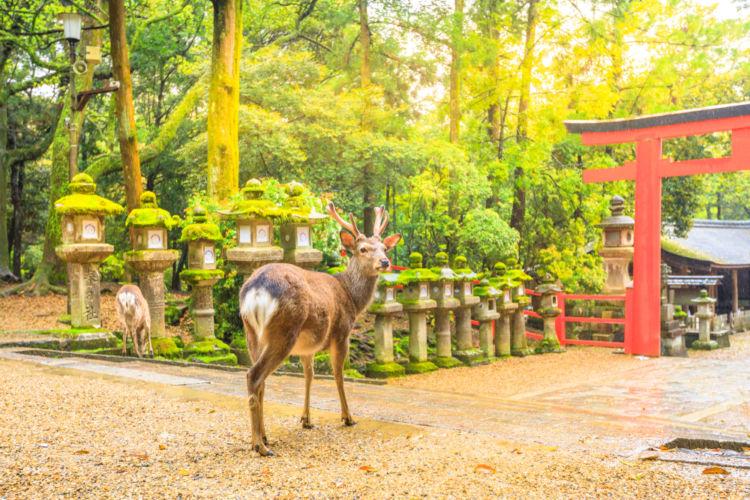 """奈良の日本酒【春鹿(はるしか)】奈良の象徴を酒名に冠した""""奈良の地酒"""""""