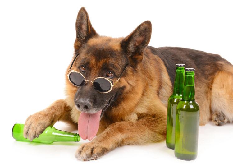 動物モチーフのビールをまとめて紹介