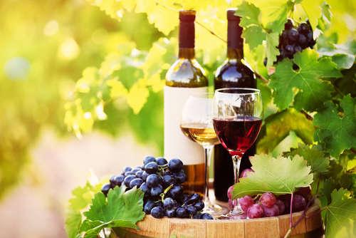 ワイン専用種ブドウの生産地の日本一を誇る北海道でワインを楽しむ