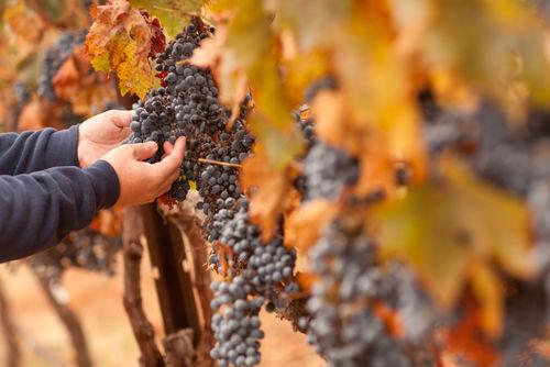 個性豊かなワインを生み出す「ドメーヌ」