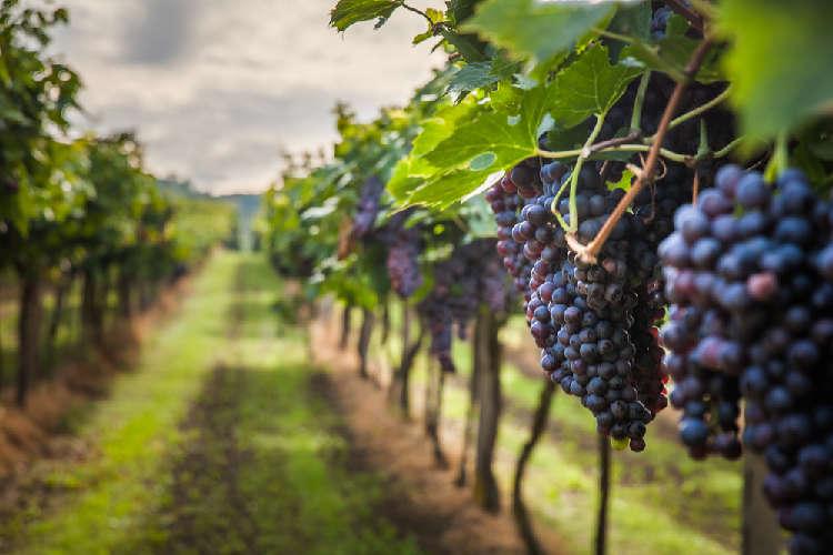 長野にある千曲川ワインバレーの優れたワイナリーを紹介