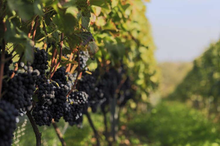 長野県・日本アルプスワインバレーで今、注目のワイナリー