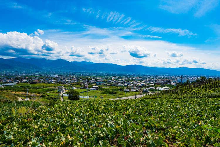 高品質のワインの宝庫!国産ワインの代表甲州の昔と今