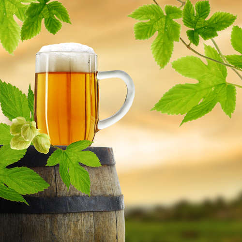 オーガニックビールの定義って?日本の人気銘柄をチェックしてみよう