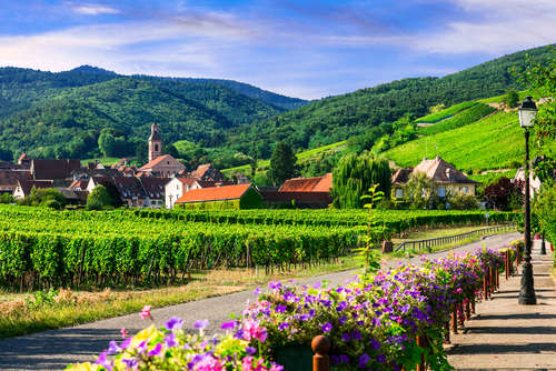 ボルドーとブルゴーニュだけじゃない! フランス「アルザス」のワイン