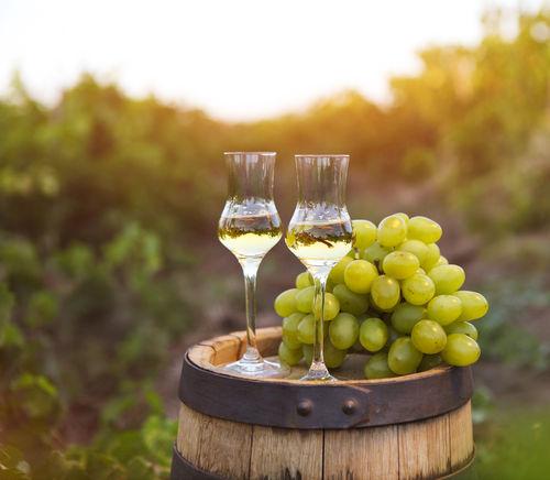 ワインを作ったブドウの搾りかすを蒸留して作るお酒、グラッパを知っていますか?