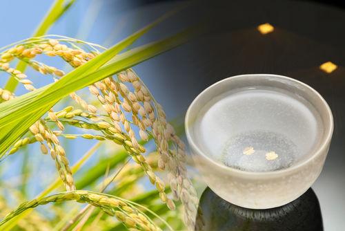 人気銘柄が多い青森の日本酒