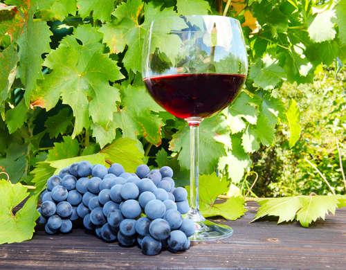 初心者も上級者も、ここでワインの種類をおさらいしてみよう!
