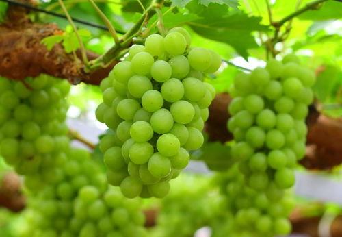 フルーティーなワインは果物の産地として有名な岡山ならでは!