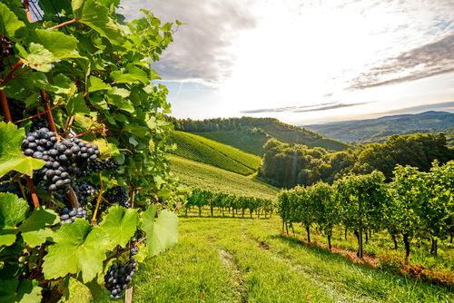 ワイン用のブドウ栽培に適した土地・九州いろいろワイナリー