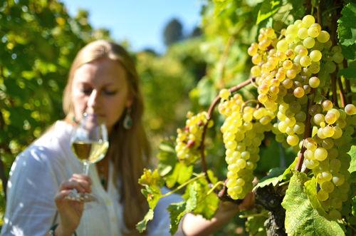 ワイン大国スイスで造られる高品質なワインとは?