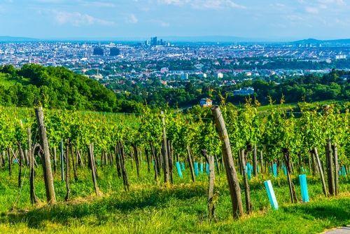 隠れたワインの名品が多い、オーストリアワインの特徴