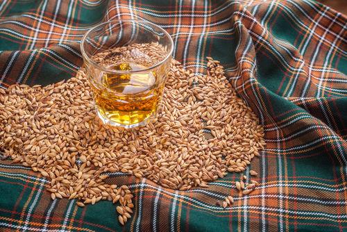 ウイスキーのもっともスタンダードな原料「大麦」を使った「モルト」とは?
