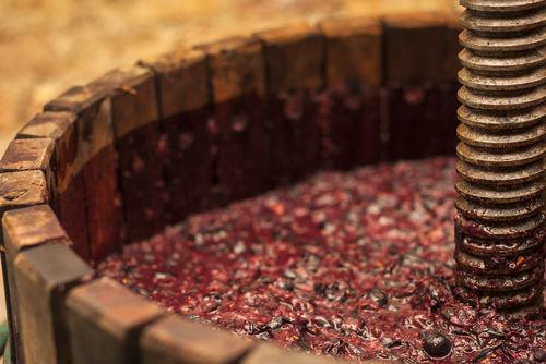 """ワインの個性を引き出す""""酵母""""の存在"""