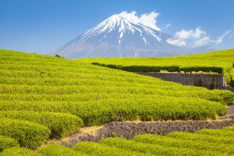 静岡に行って飲んでみたい!おすすめの日本酒(地酒)【東海編】