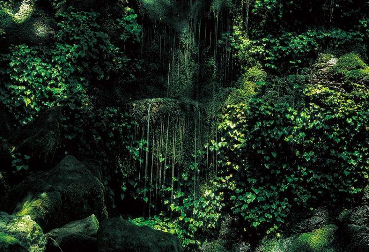 宮崎の焼酎【雲海(うんかい)】五ヶ瀬の自然が生んだ元祖本格そば焼酎