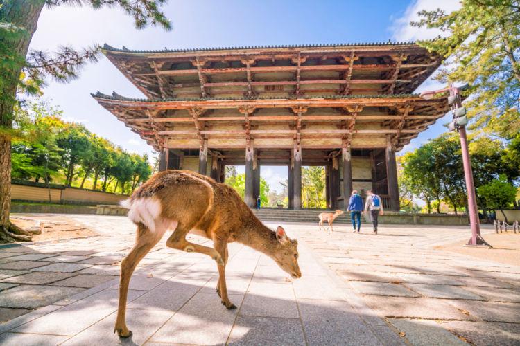 奈良に行って飲んでみたい! おすすめの日本酒(地酒)【近畿編】