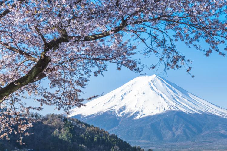 静岡の日本酒【開運(かいうん)】吟醸王国を代表する良質なお酒