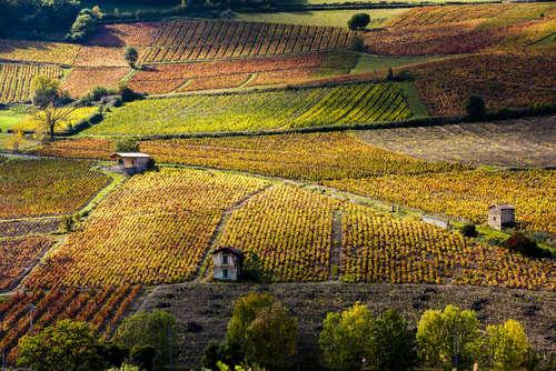 毎年待ち遠しいワイン「ボジョレーヌーボー」。その魅力に迫る