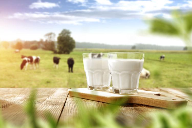 焼酎と牛乳、意外な組み合わせが思わぬおいしさを!