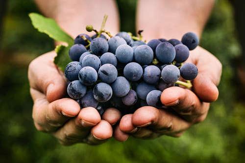 ワインのヴィンテージとは?ヴィンテージ付きのワインは高級ワイン?