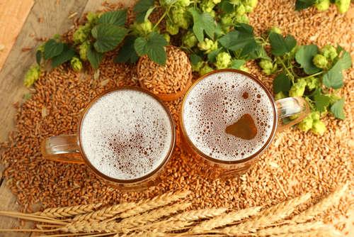ビールはこうして作られる。製造工程を知る