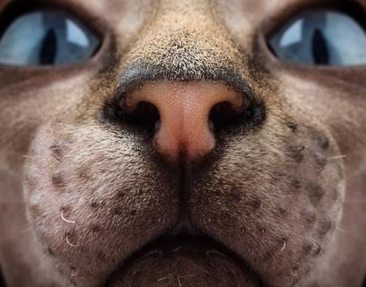 が 荒い 鼻息 猫