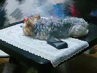 リビングにホームカメラを設置したら、愛犬のかわいいイタズラが発覚してしまった