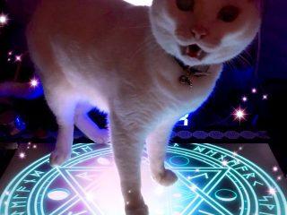 表情がノリノリ!魔法陣の上に乗った猫さんが完全に召喚されたモンスターだった