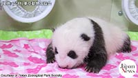 Panda cub opens eyes for 1st time at Ueno Zoo