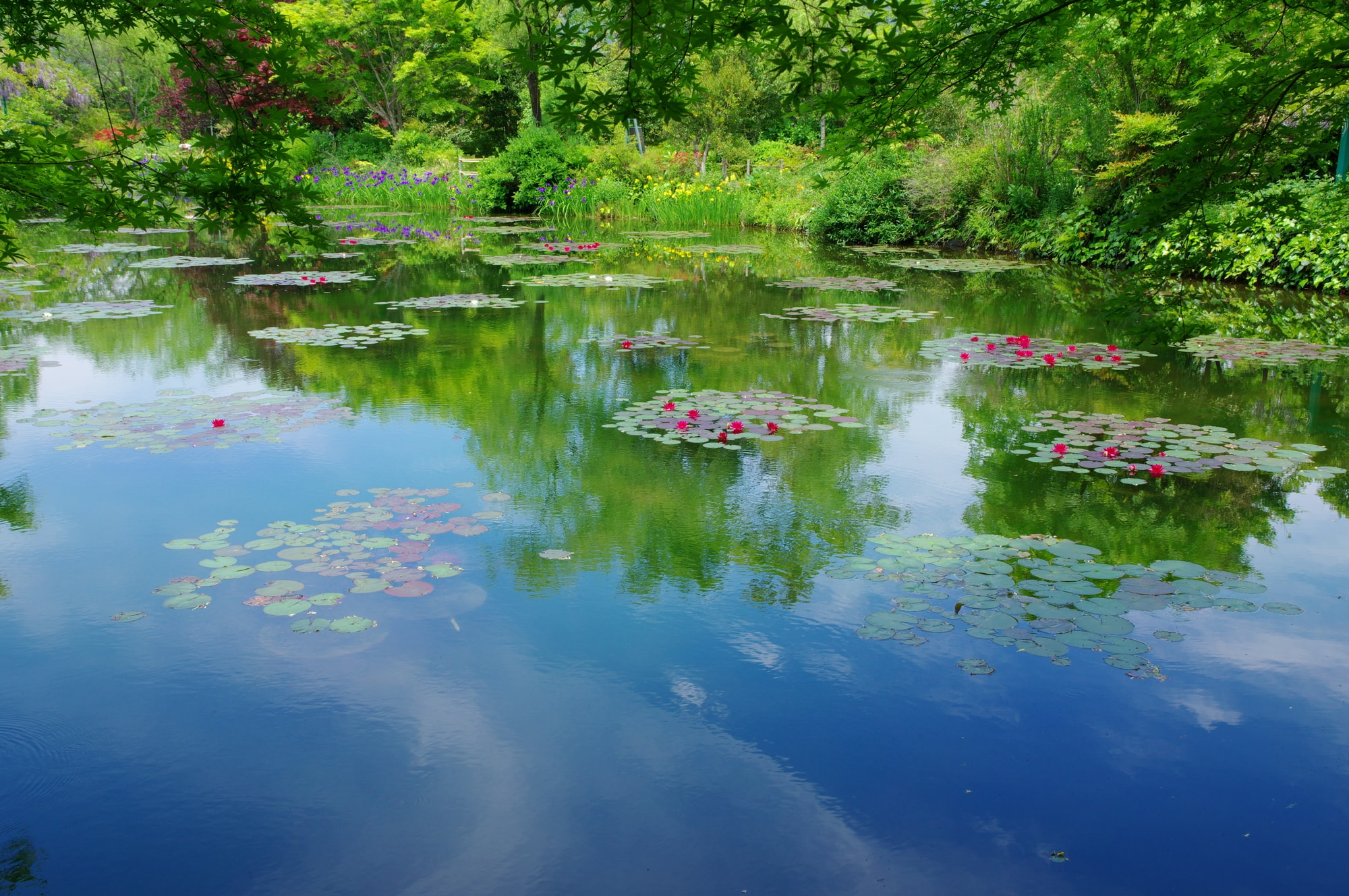 The Water Garden is reminiscent of Monet's water lily painti