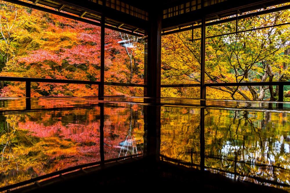 瑠璃光院で紅葉が机に反射する様子