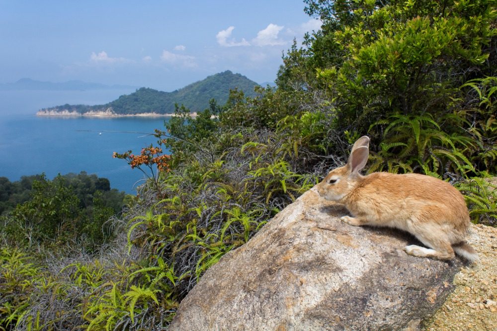 Okunoshima Island: Bunnies, bunnies and more bunnies! | THE GATE