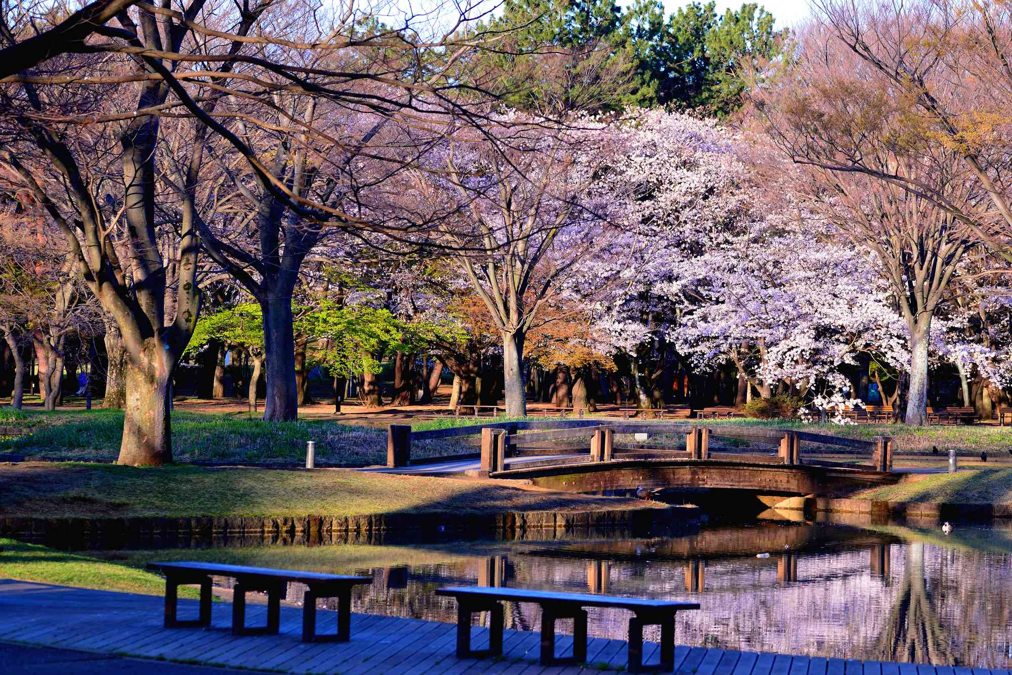 Yoyogi Park: Former Olympic Village, Now a Green City Park|THE GATE|Japan  Travel Magazine: Find Tourism & Travel Info