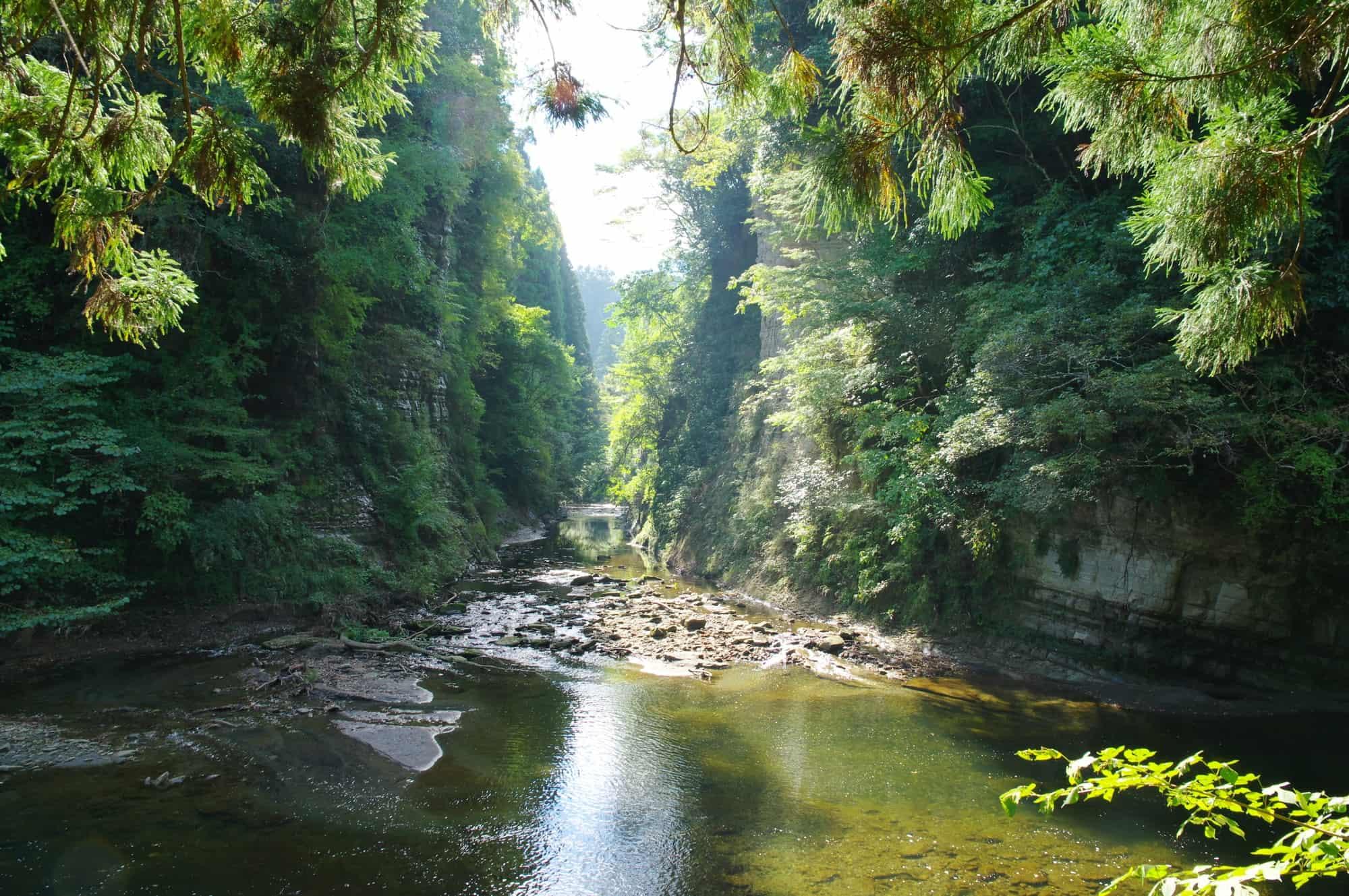 被绿色所围绕的养老溪谷